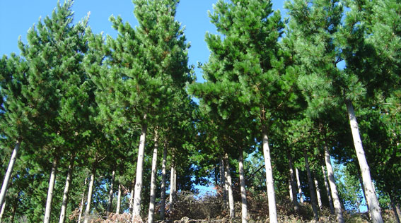 nz forestry investments ltd